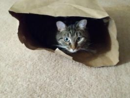Lilly in a Bag by CherokeeGal1975