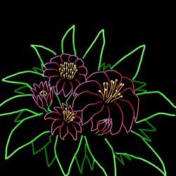 Flores 001 - Neon by Juracan