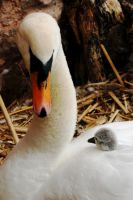 Mother and Child by Earth-Hart