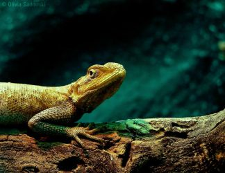 Agama agama by imfromthespace