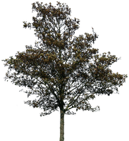 tree 36 png by gd08