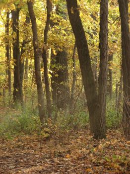 Autumn Forest Landscape 15 by FantasyStock