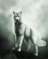 The I couldn't sleep wolf :D by cottondragon