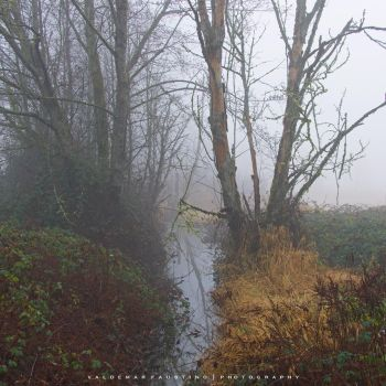 Foggy Creek by Val-Faustino