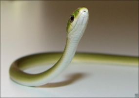 Little Green Snake by MauserGirl