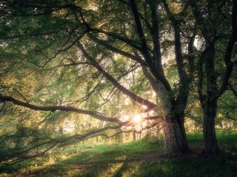 The sparkling forest by streamweb
