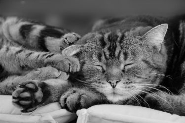 Les Chats by Flore-stock