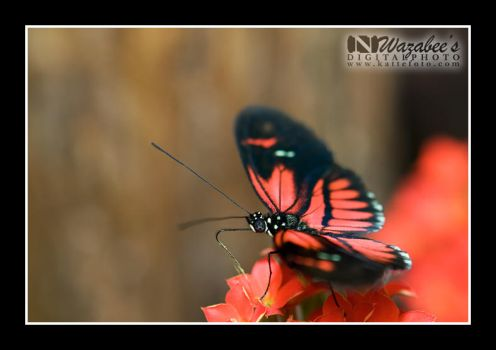 Butterfly 1 by wazabees