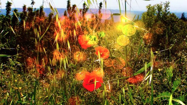 poppies by Sandy124
