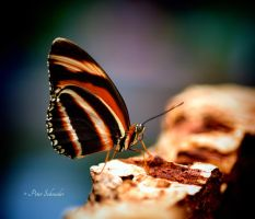 Colourful wings. by Phototubby
