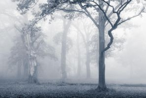 Tree Heaven by aw-landscapes