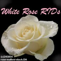 white rose RIDs by wsl30horselover10