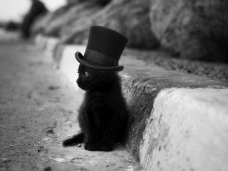 Hatter cat  by SottoPK