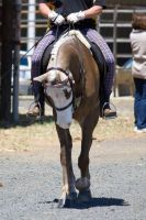 STOCK - 2014 TotR Arabians-130 by fillyrox