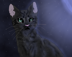 Cinderpelt by TheRealBramblefire