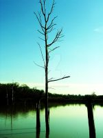 dead tree lake by LovelyBPhotography