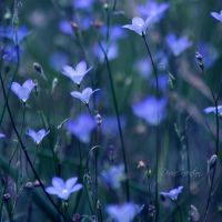 Where the wild flowers grow by DivineInvention