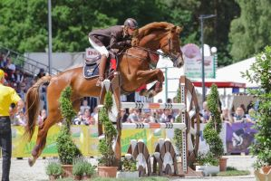 ISH Gelding Clover Takeoff Phase Wooden Jump by LuDa-Stock