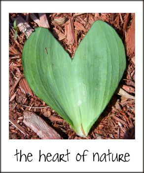 The Heart Of Nature by Rainbow826