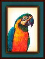 Macaw by fmr0