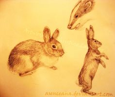 Rabbits and a Badger by Asenceana
