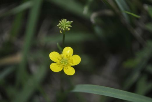 Small yellow flowers by tinseltowntommy on deviantart mightylinksfo