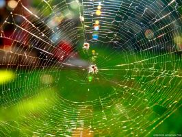 Spider Web by Mike-Kossi